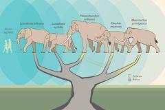 3.-drzewo-rodowe-słoniowatych
