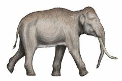 5.-rekonstrukcja-wyglądu-słonia-leśnego