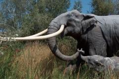 6.-słoń-leśny-rekonstrukcja