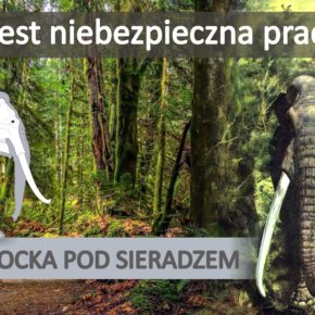 Słoń leśny z Kłocka pod Sieradzem